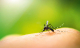 vocation-sante-piqure-moustique